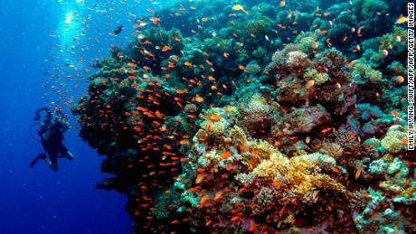 Can coral farms save our reefs?