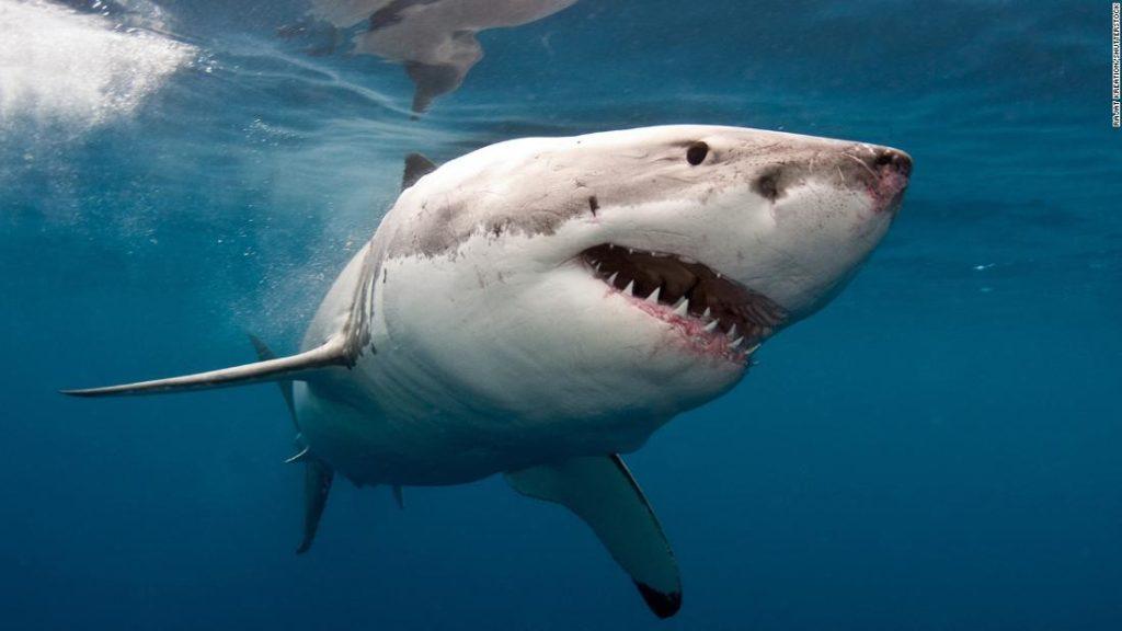 Shark attack: Man killed at Cable Beach, Western Australia