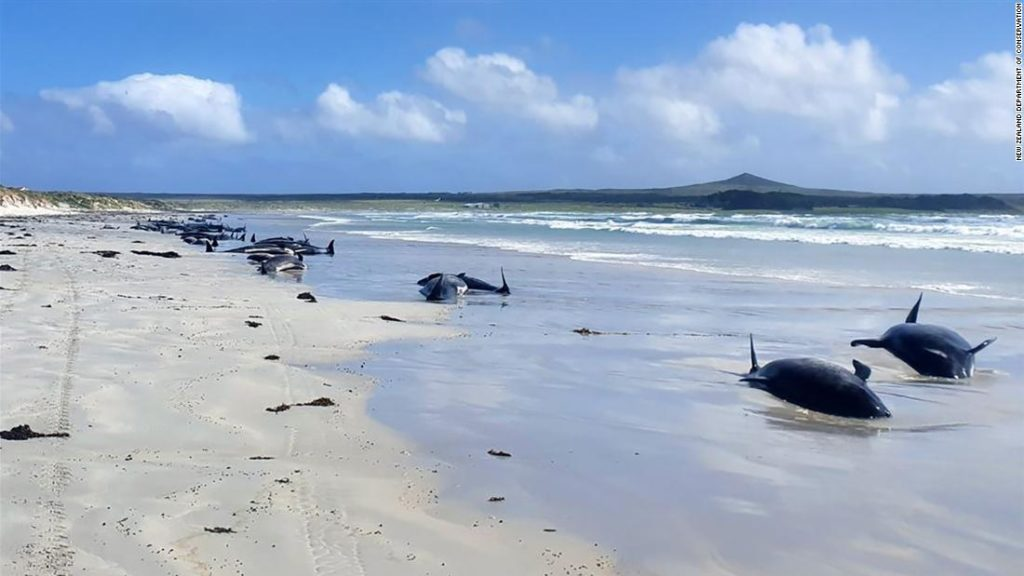 Nearly 100 whales die in mass stranding in New Zealand