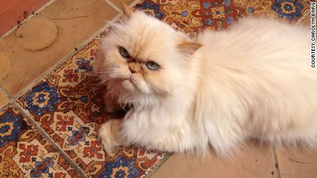 Barg and her husband decided to get more cats after their 18-year-old Himalayan had passed away.