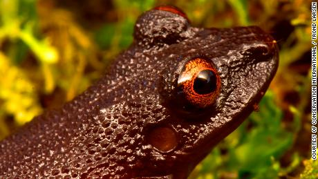 20 new species found, and lost wildlife rediscovered, in the Bolivian Andes