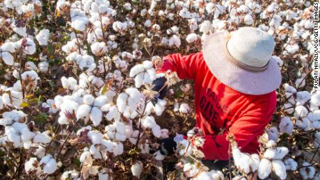 US blocks cotton imports from China region over reported forced-labor abuses