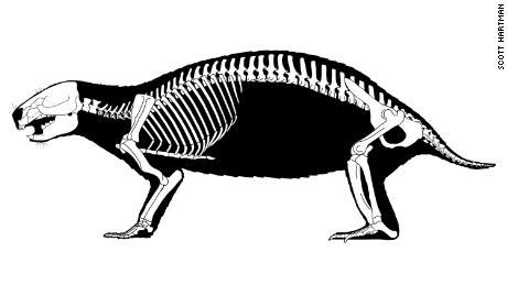 This drawing shows Adalatherium's skeleton.