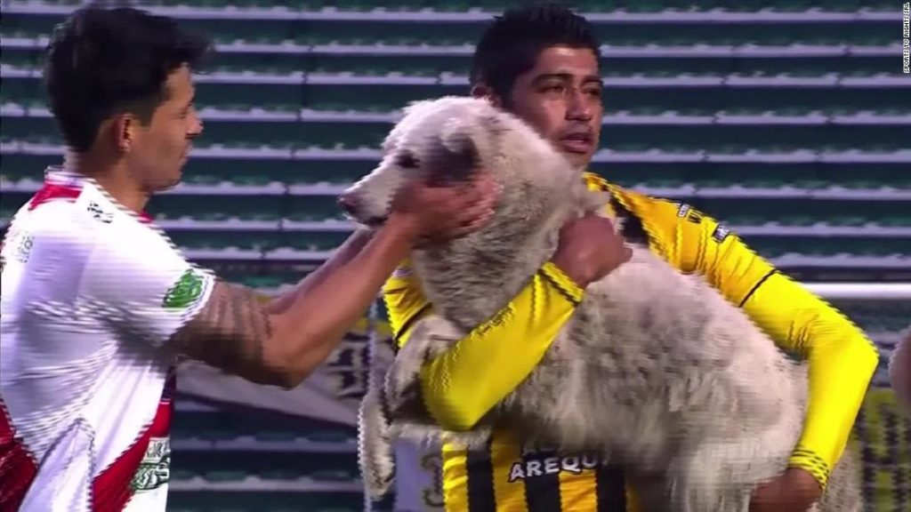 Football's wacky ending to 2020: A dog pitch invasion and a new manager greeted with a clown song