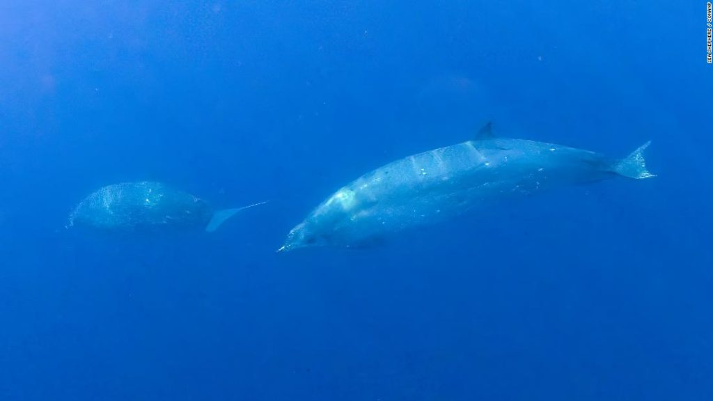 New whale species discovered off coast of Mexico