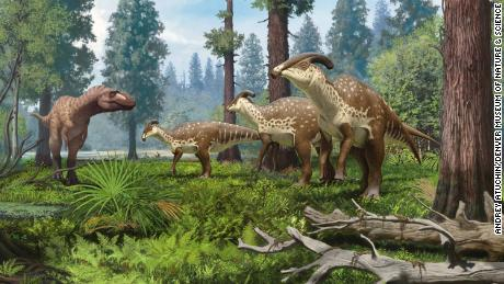 An illustration of a group of Parasaurolophus dinosaurs being confronted by a tyrannosaurid in the subtropical forests of New Mexico 75 million years ago.