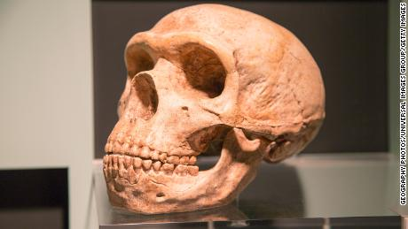 How Neanderthal DNA affects human health -- including the risk of getting Covid-19