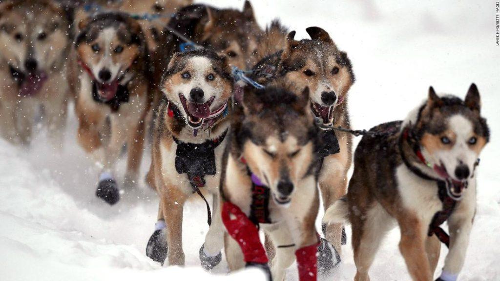 Iditarod: The legendary sled dog race going ahead amid the pandemic