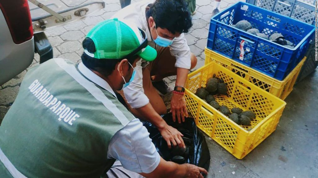Galapagos airport officials find 185 baby tortoises hidden in a suitcase