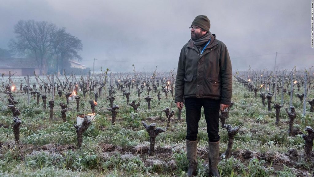 French winemakers face devastation after worst weather in 30 years