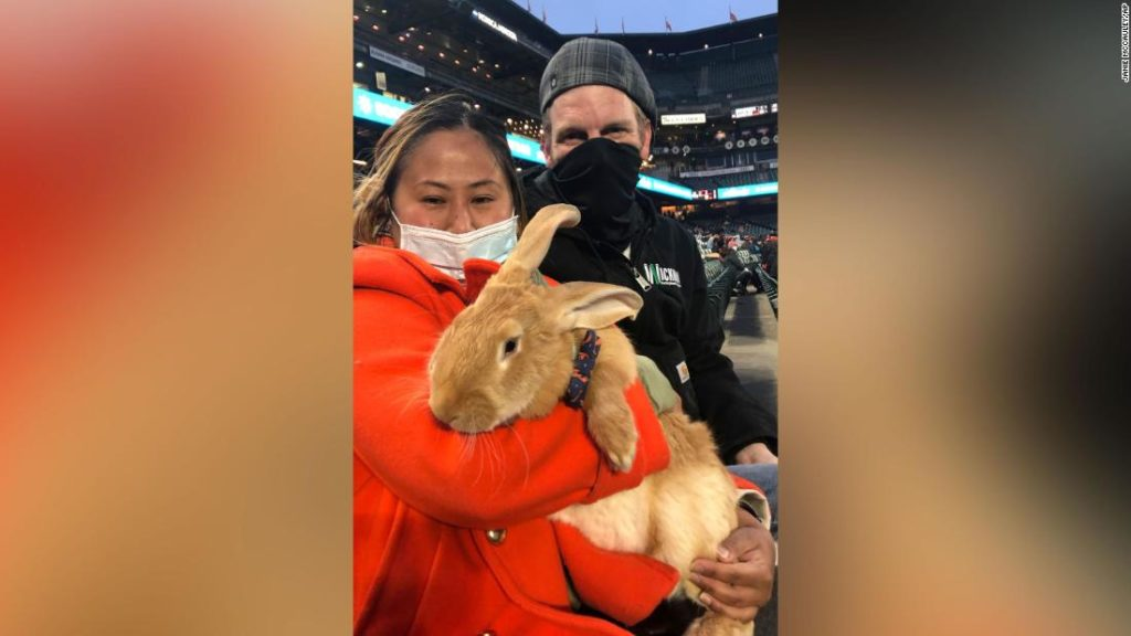 Bunny attends baseball game and everyone is in love with it