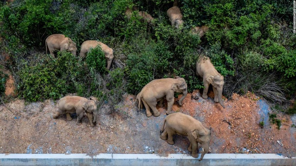 Elephant herd razes 500km path of destruction after escape from China nature reserve