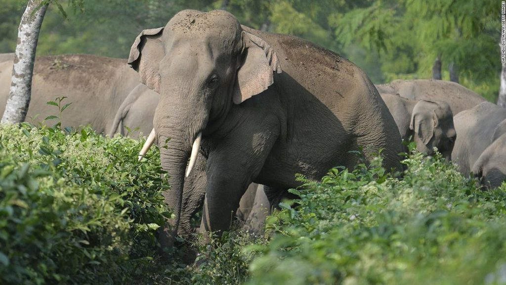 Solving India's deadly conflict between humans and elephants