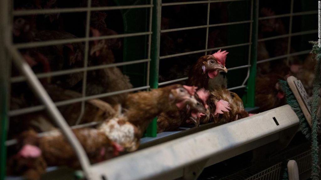 EU plans to end caged animal farming