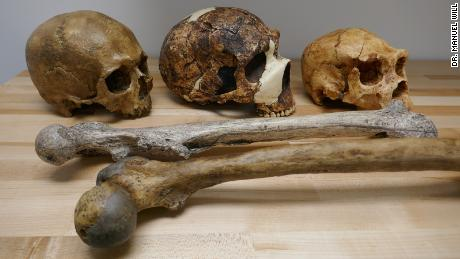Human fossils illustrate the variation in brain (skulls) and body size (thigh bones) during the Pleistocene period.